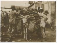 Burro Cargado. Republica Dominicana. Imagen de Principios del Siglo 20. Fuente : AGN